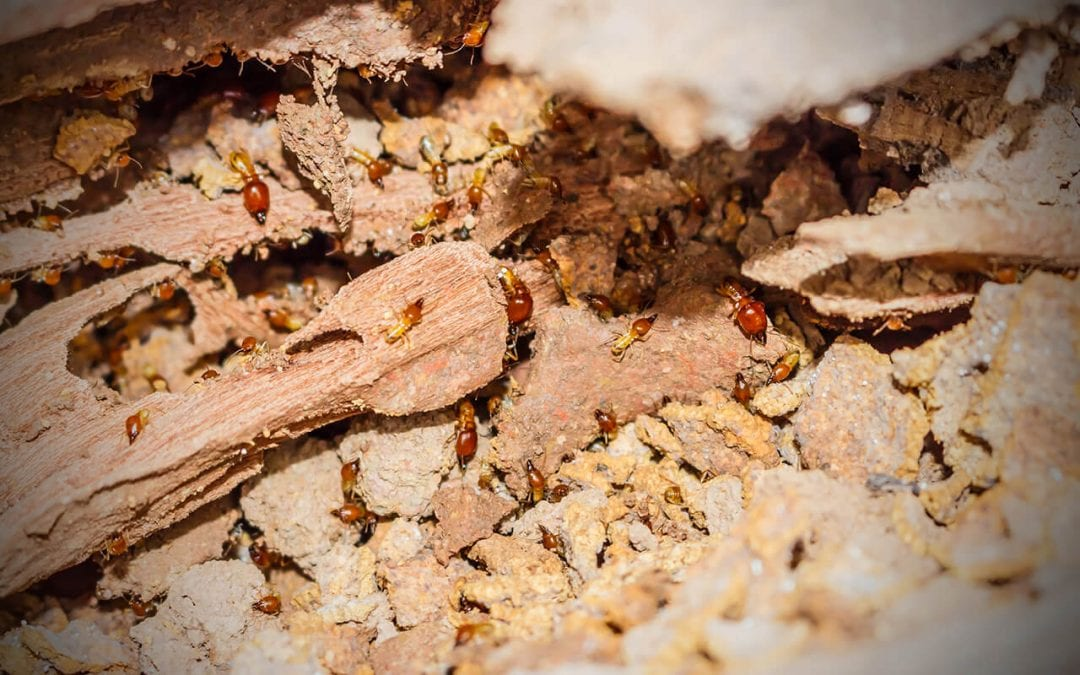 preventing termites in your home