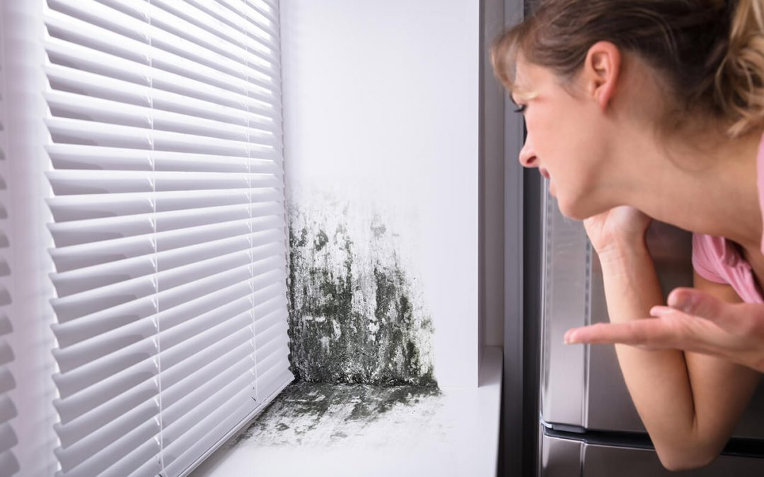 prevent mold in the home